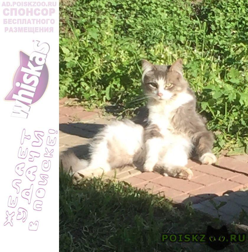 Пропал кот стёпа г.Правдинский