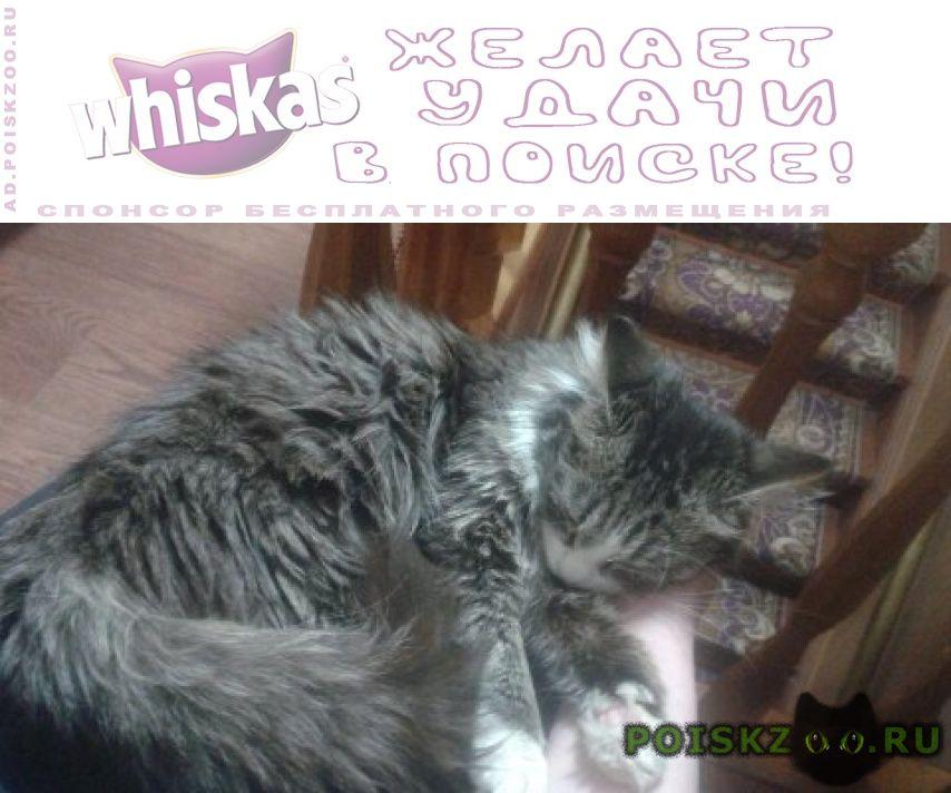 Пропала кошка лиса найдись г.Петрозаводск