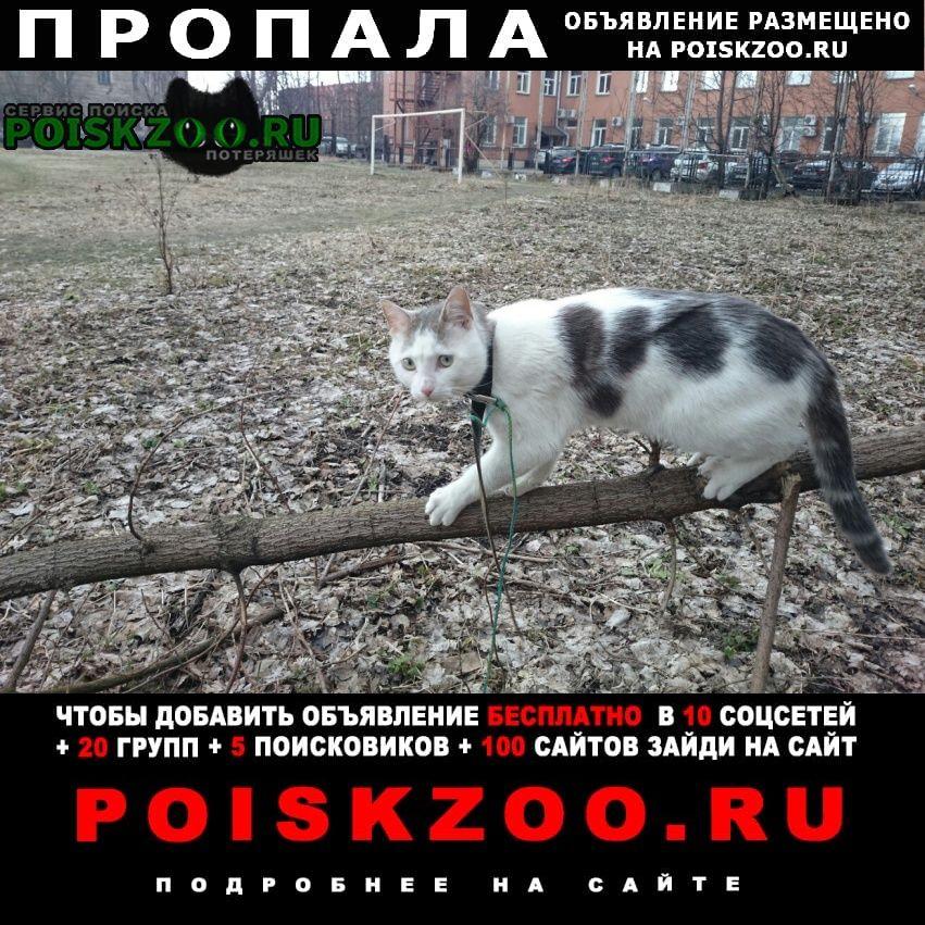 Санкт-Петербург Пропал кот - волчок с ошейниками от блох