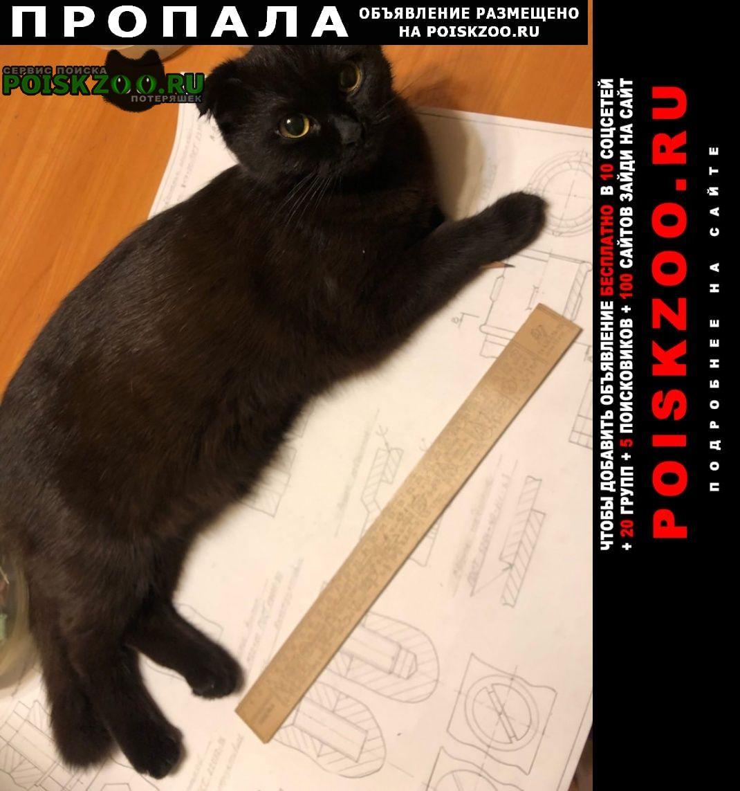 Пропала кошка Тула
