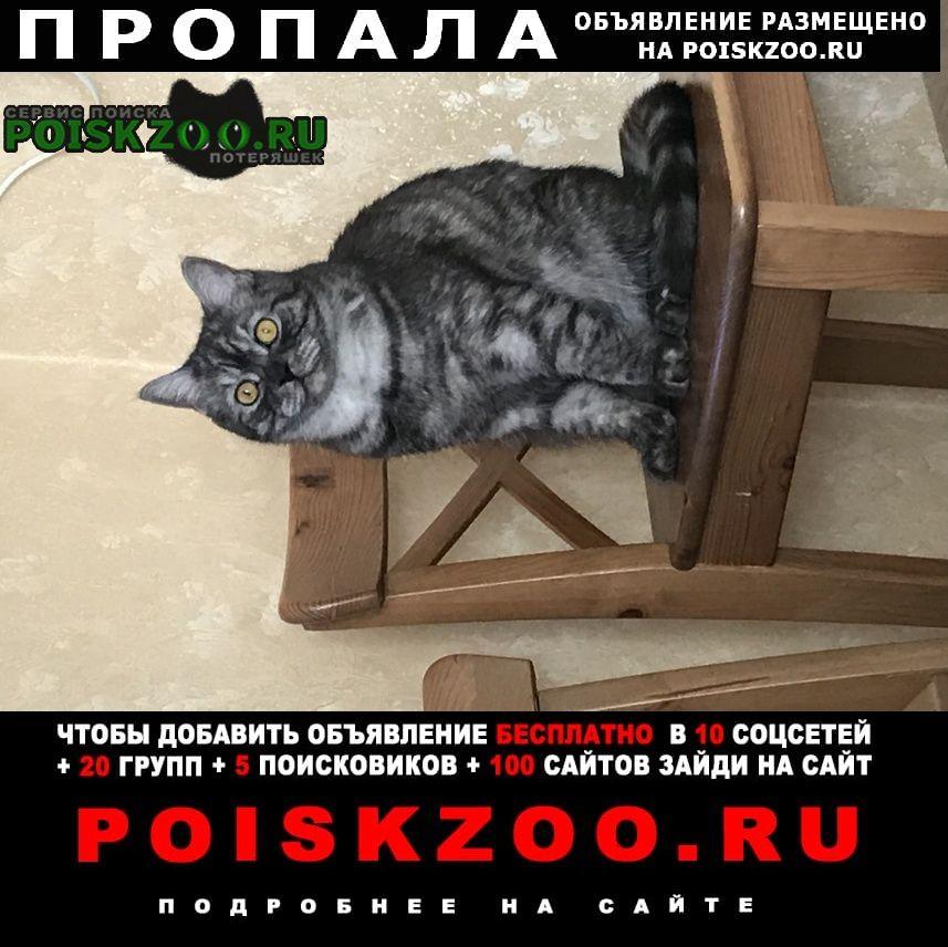 Пропал кот Вороново