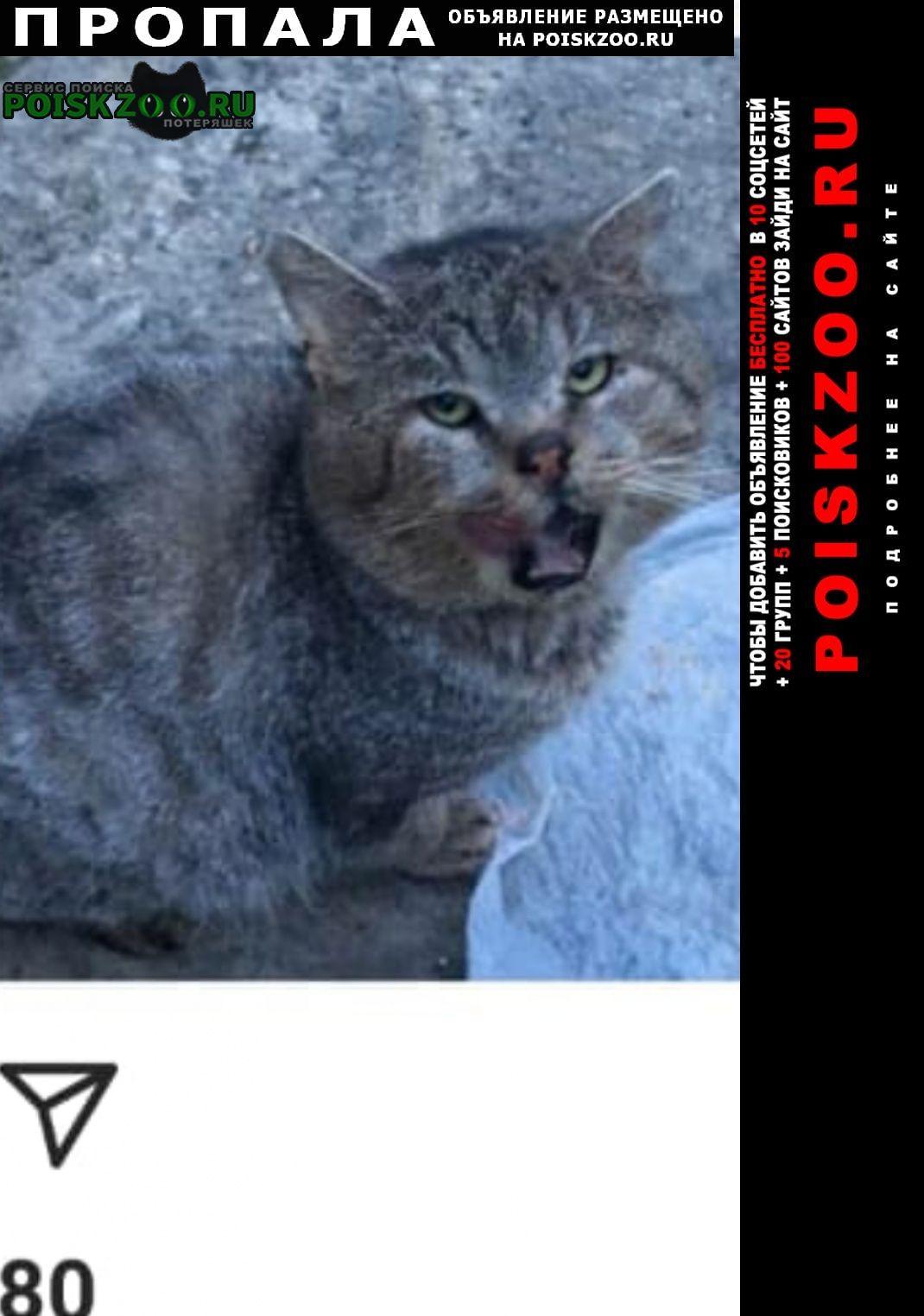 Пропала кошка кот Ставрополь