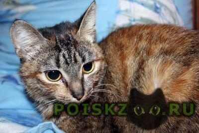 Пропала кошка Горно-Алтайск