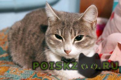 Пропала кошка г.Горно-Алтайск