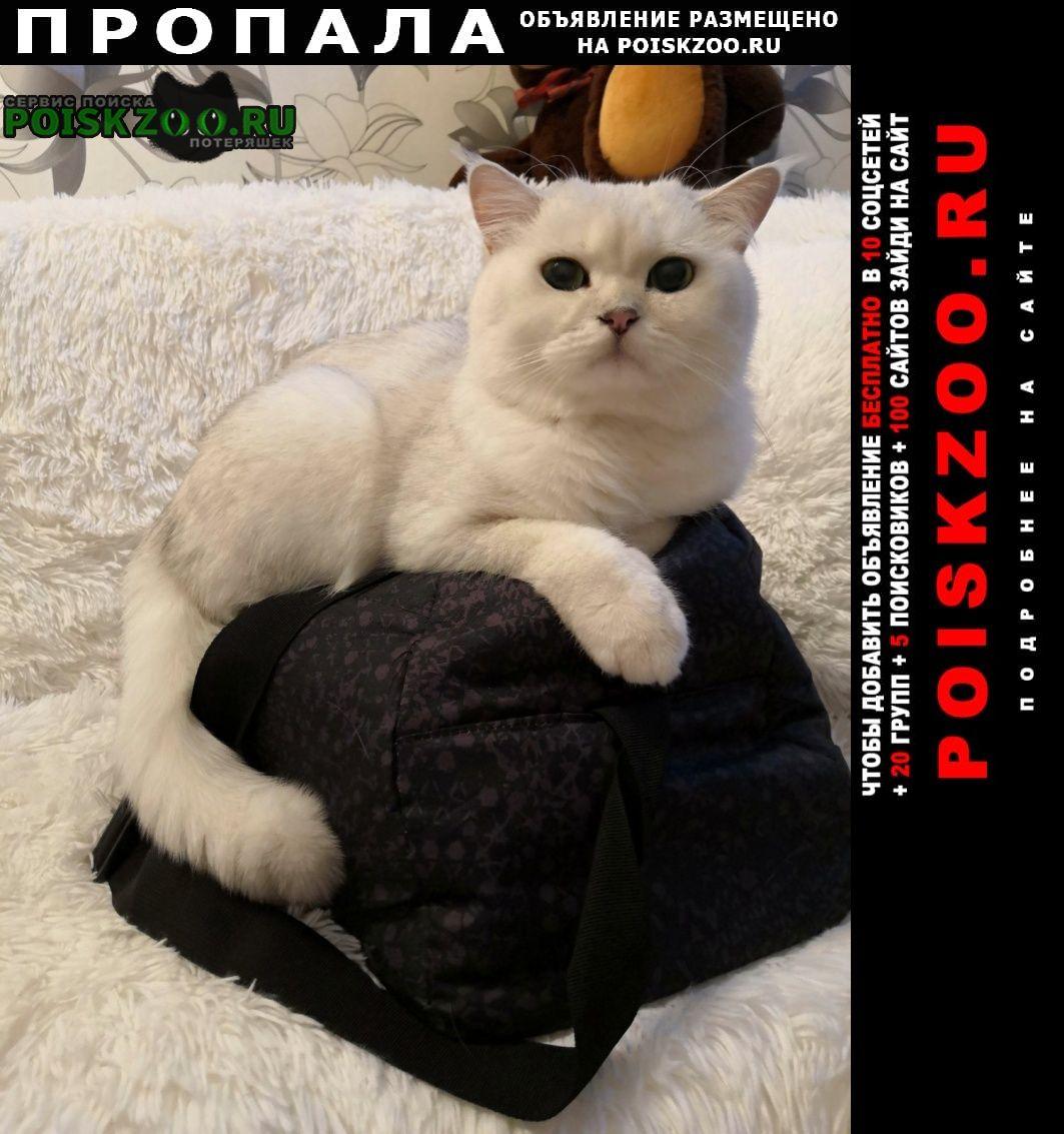 Пропала кошка Богородск