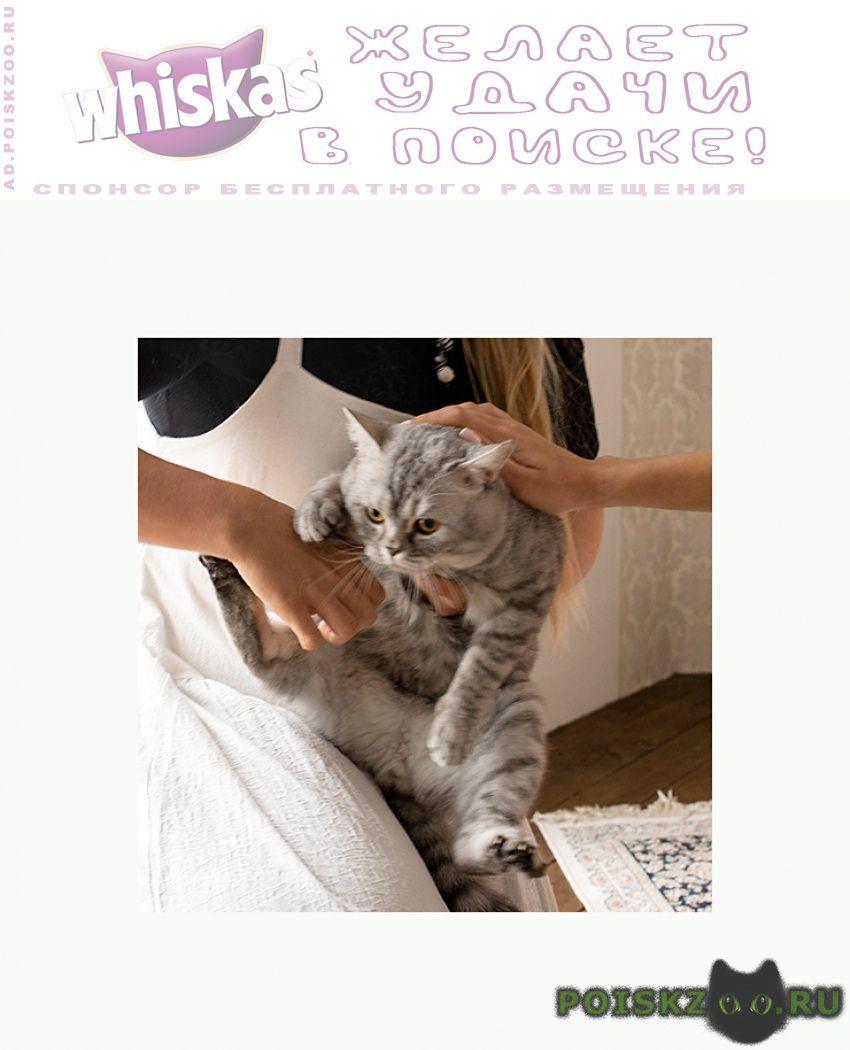 Пропал кот продавцам не беспокоить г.Сосновоборск (Красноярский край)