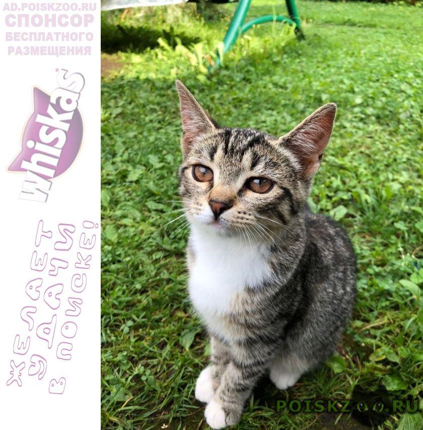 Пропала кошка откликается на имя киса г.Красноармейск (Московская обл.)