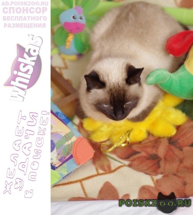 Пропала кошка сиамская, тайская. г.Казань