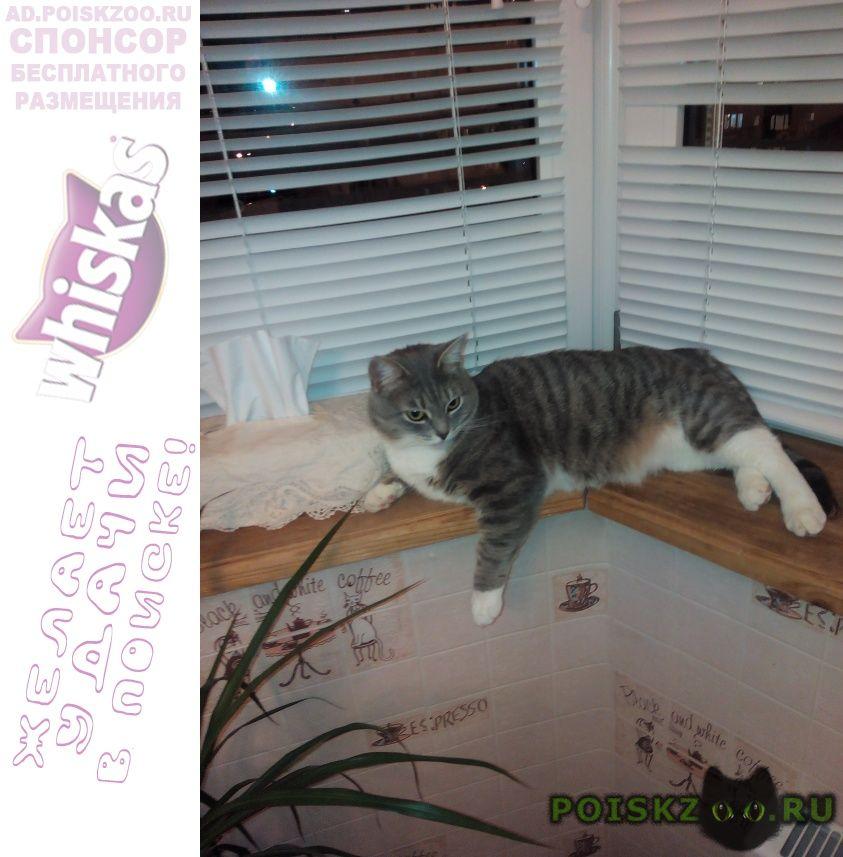 Пропала кошка в снт горняк в сычево г.Волоколамск
