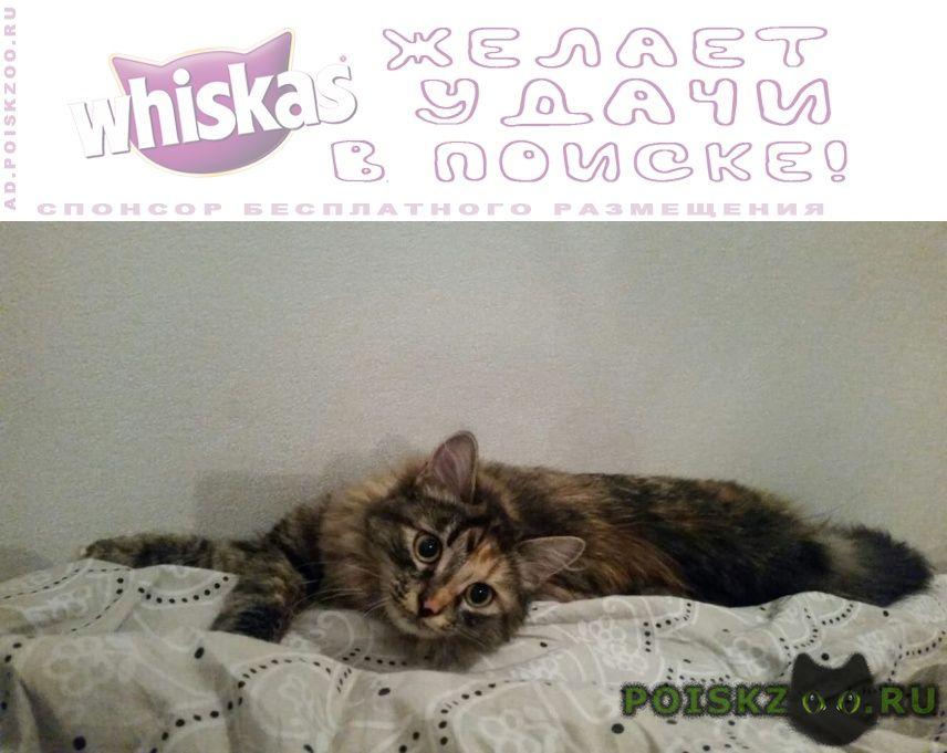 Пропала кошка любимая г.Томск