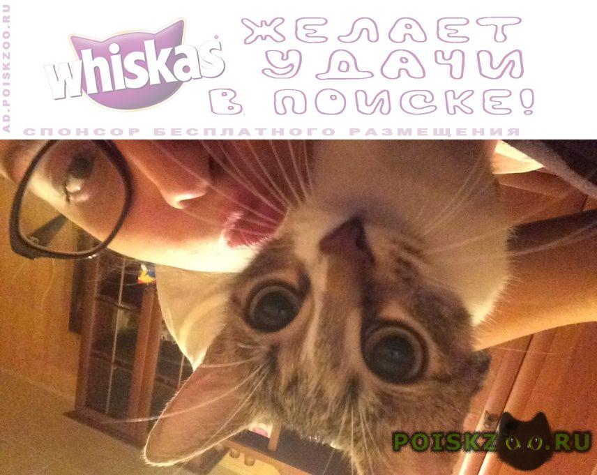 Пропала кошка г.Дедовск