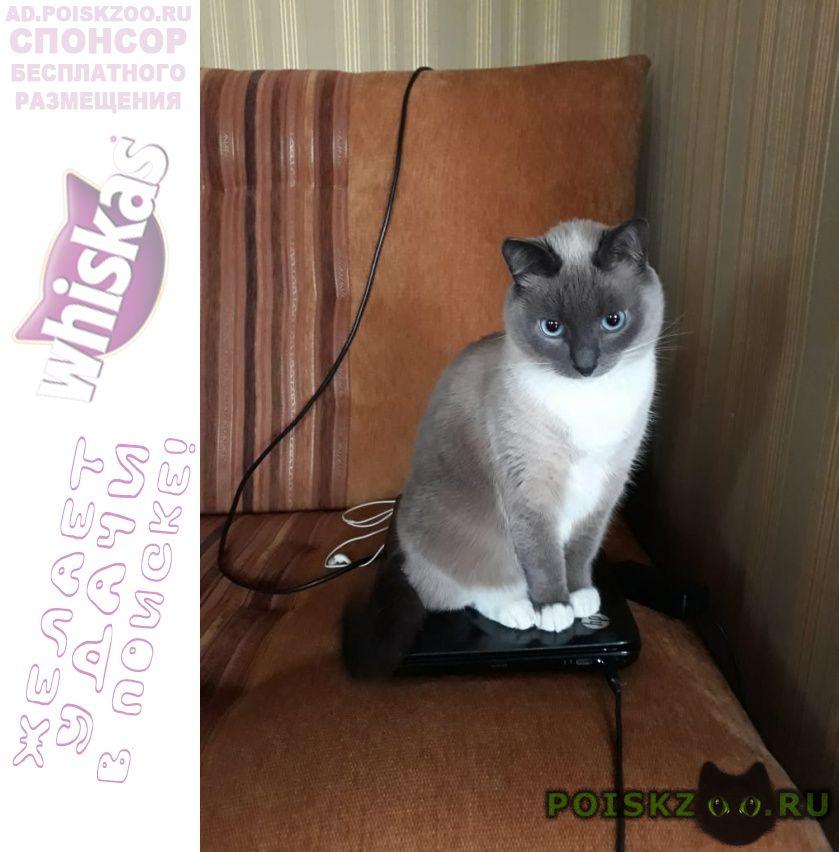 Пропал кот сиамский г.Томилино