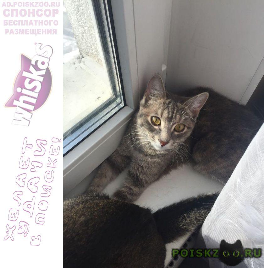 Пропала кошка 903 корпус г.Зеленоград