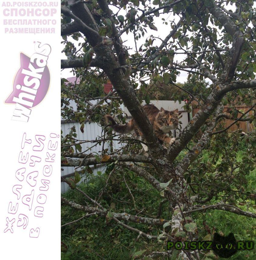 Пропала кошка г.Дмитров
