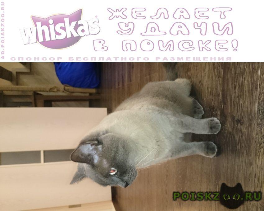 Пропал кот г.Смоленск