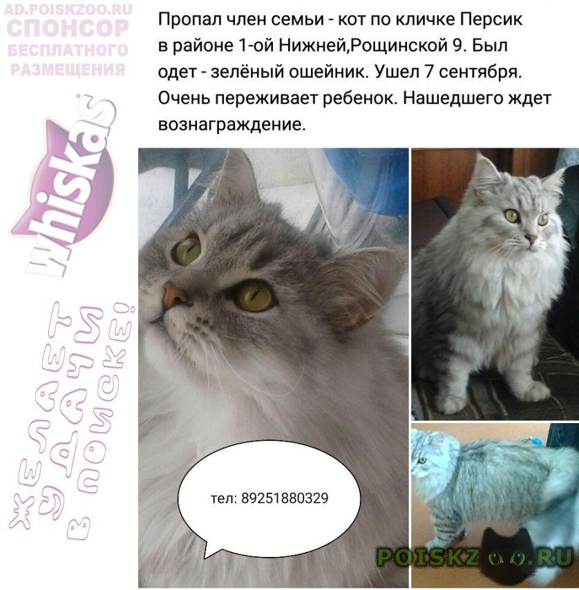 Пропал кот г.Ивантеевка (Московская обл.)