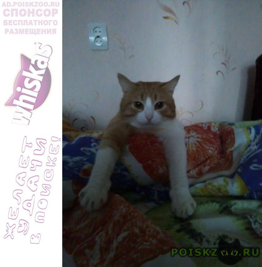 Пропал кот г.Нижний Новгород