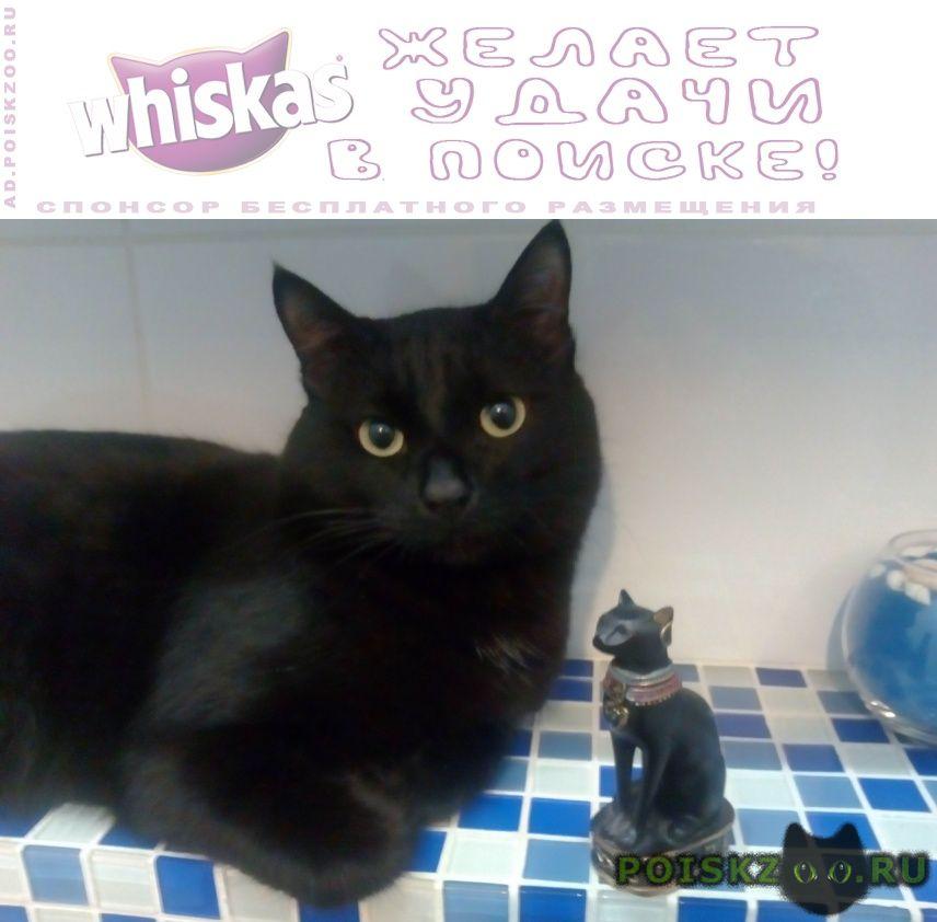 Пропал кот чёрный  г.Иркутск
