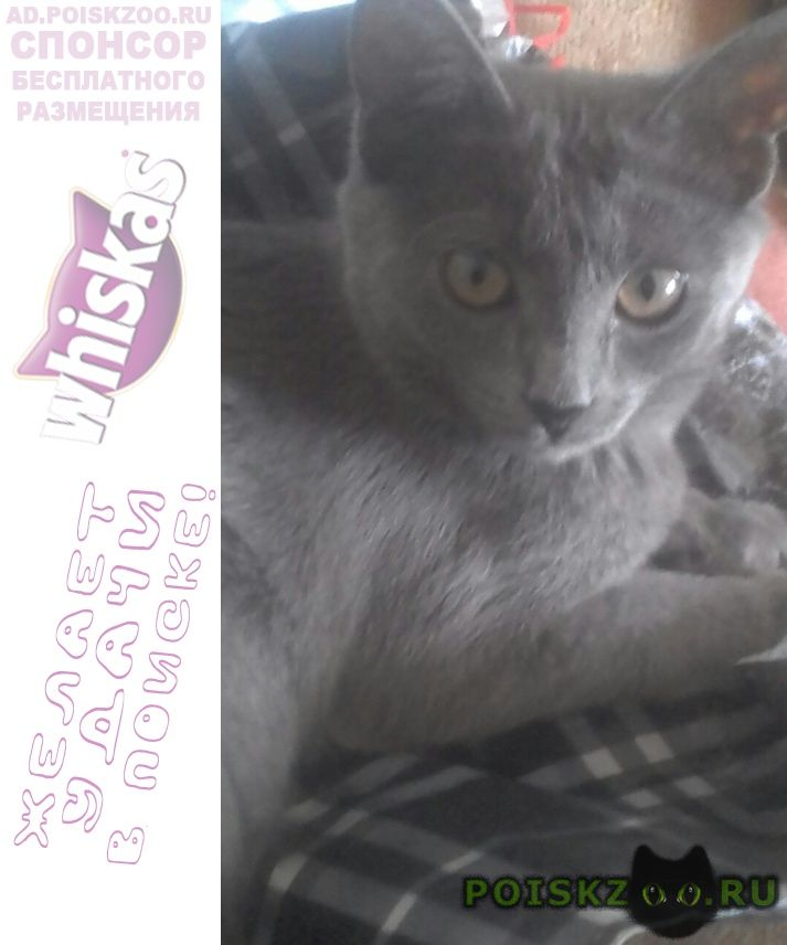 Пропала кошка 19.09.2018 года г.Липецк