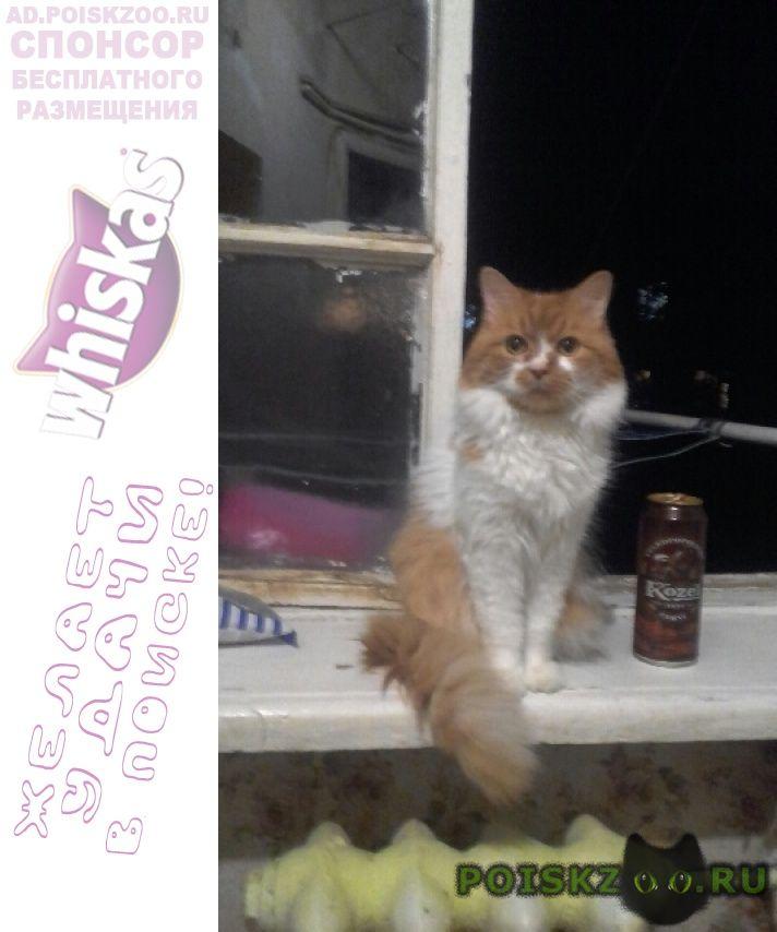 Пропал кот кличка персик или рыжий г.Геленджик