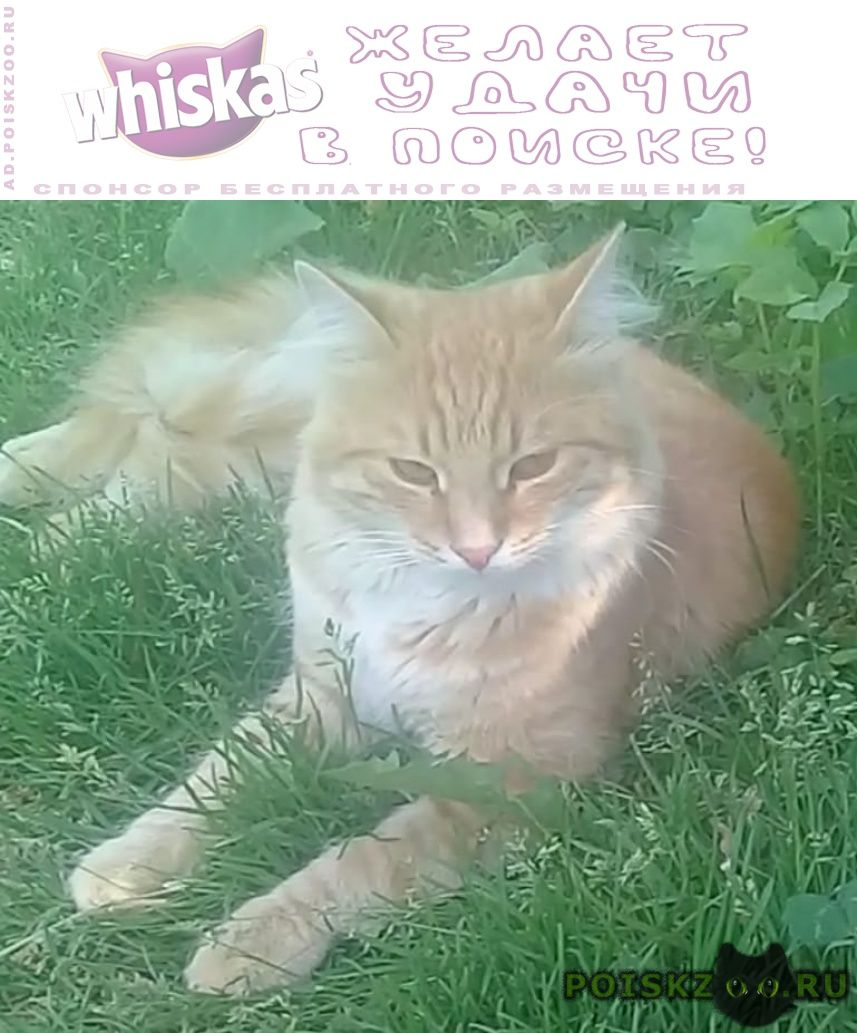 Пропал кот г.Боровск