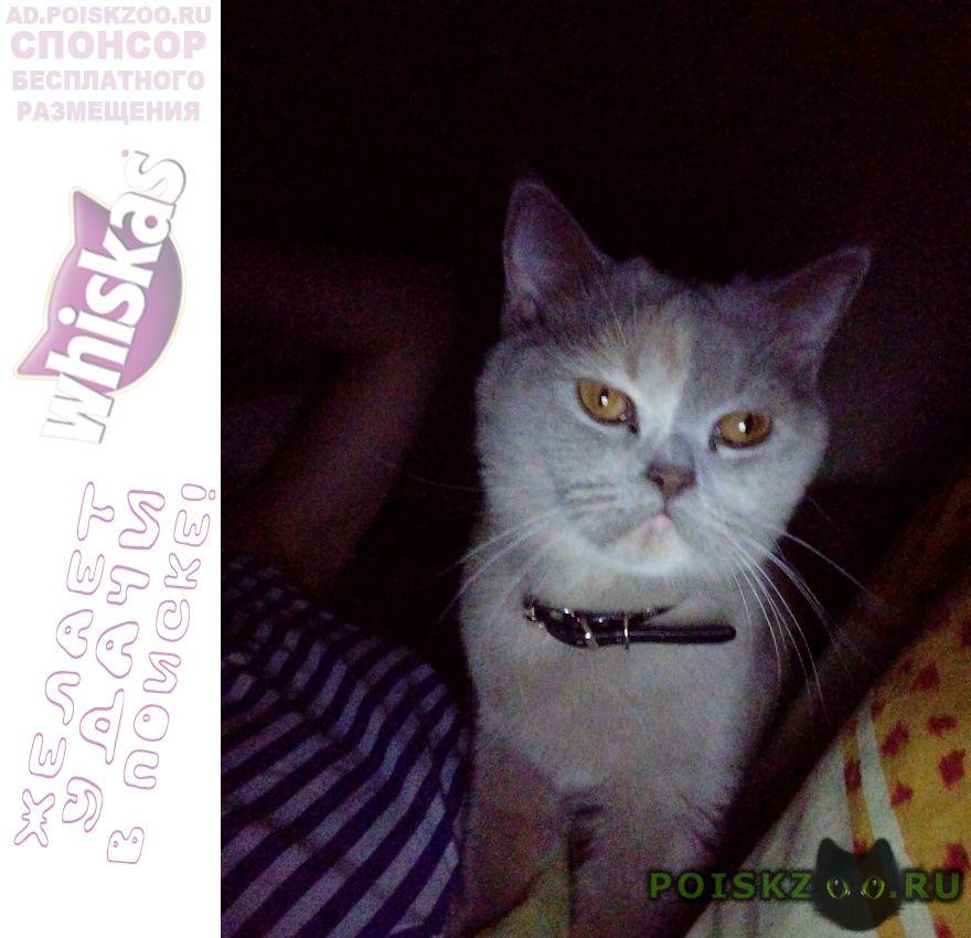 Пропала кошка sos   г.Калуга