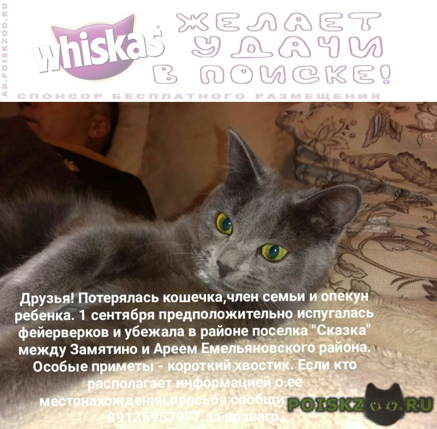 Пропала кошка г.Красноярск