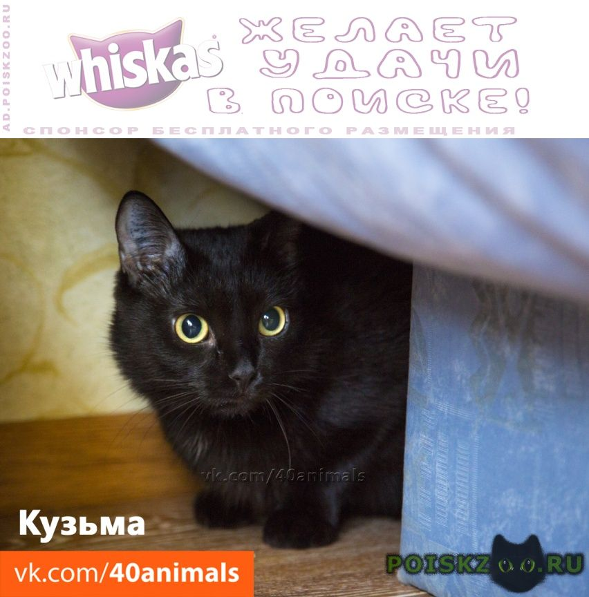Пропал кот в дом возьмите друга и охранника г.Новосибирск