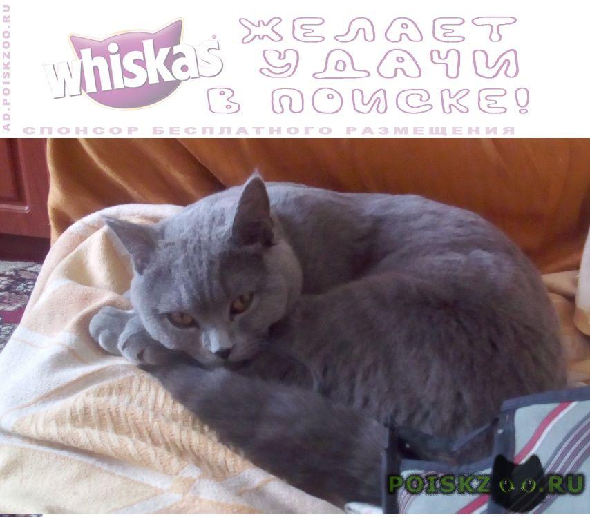 Пропал кот 15000 г.Аксай (Ростовская обл.)