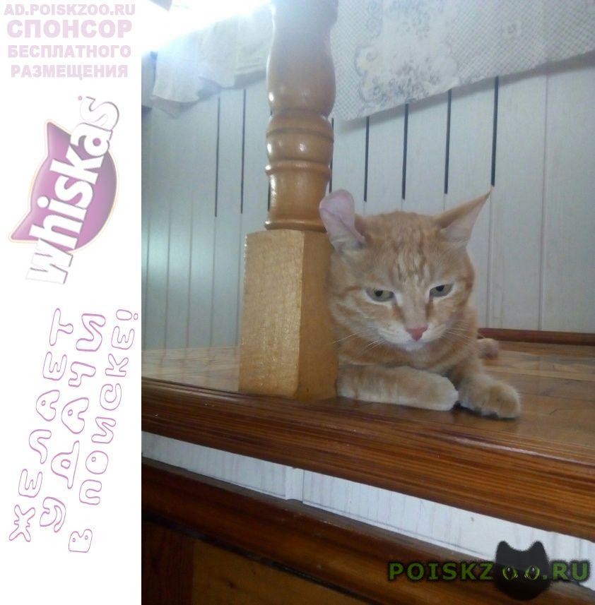 Пропал кот г.Кропоткин