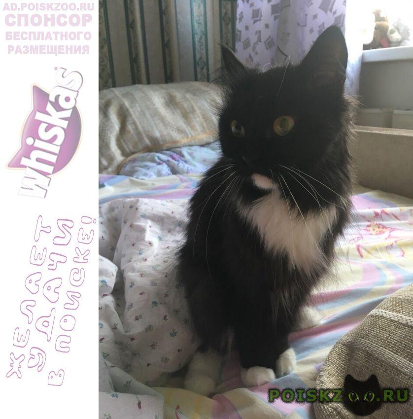 Пропала кошка г.Сургут
