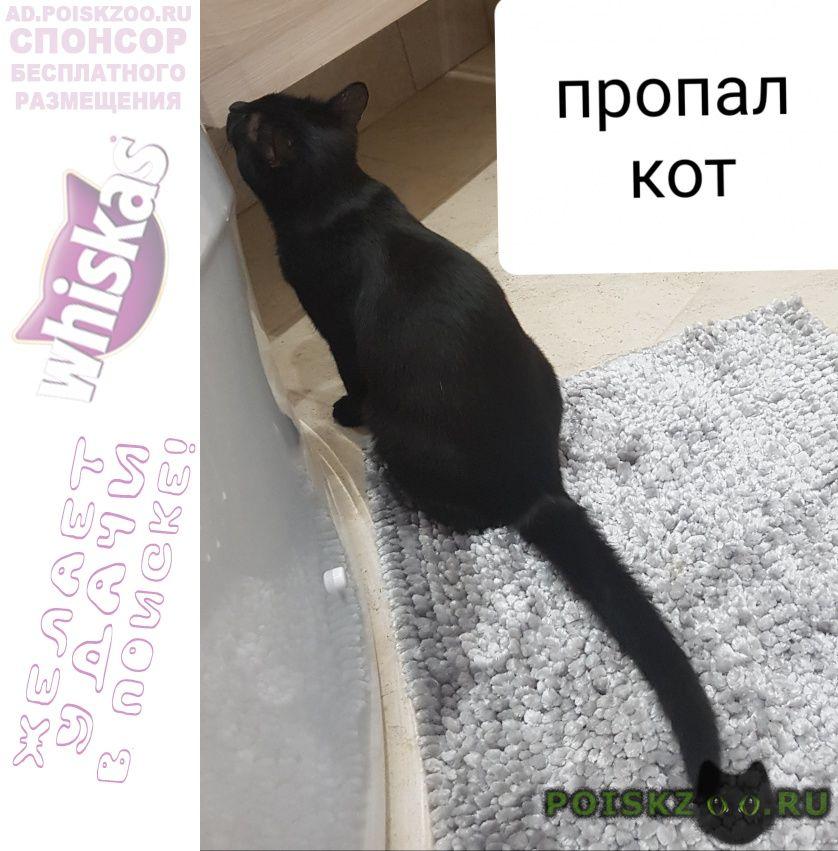 Пропал кот черный г.Москва