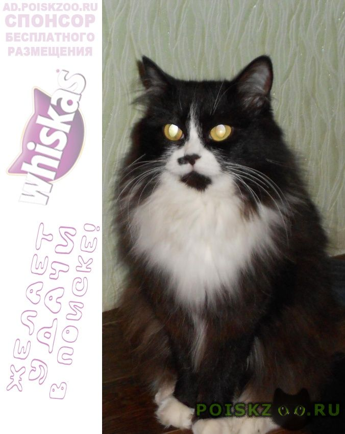 Пропала кошка черно-белая г.Новосибирск