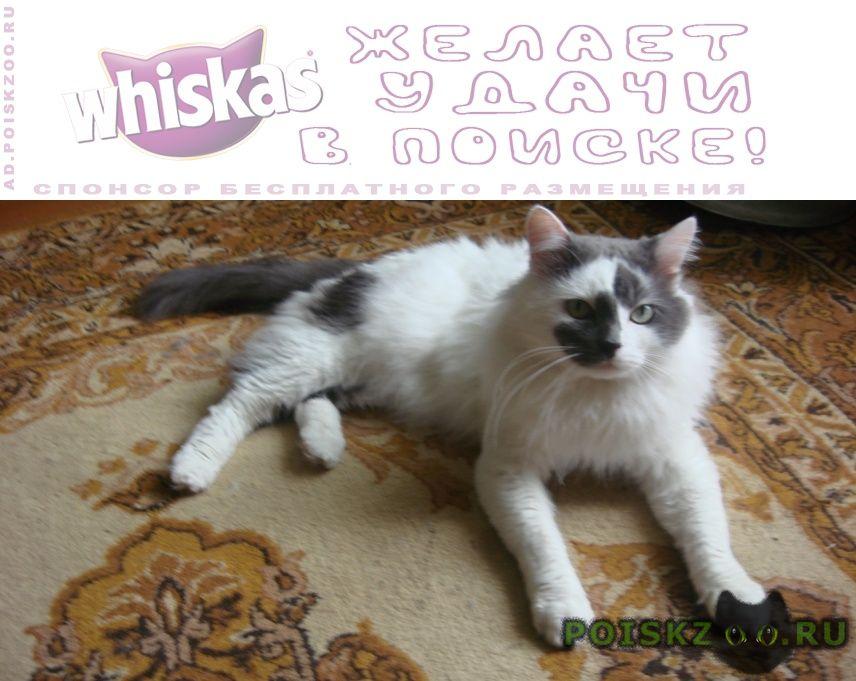 Пропал кот любимый г.Рязань