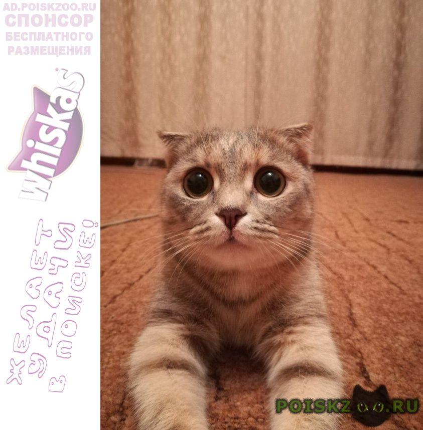 Пропала кошка г.Кемерово