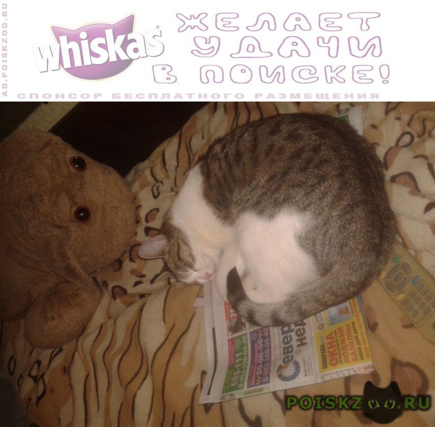 Пропала кошка г.Северодвинск