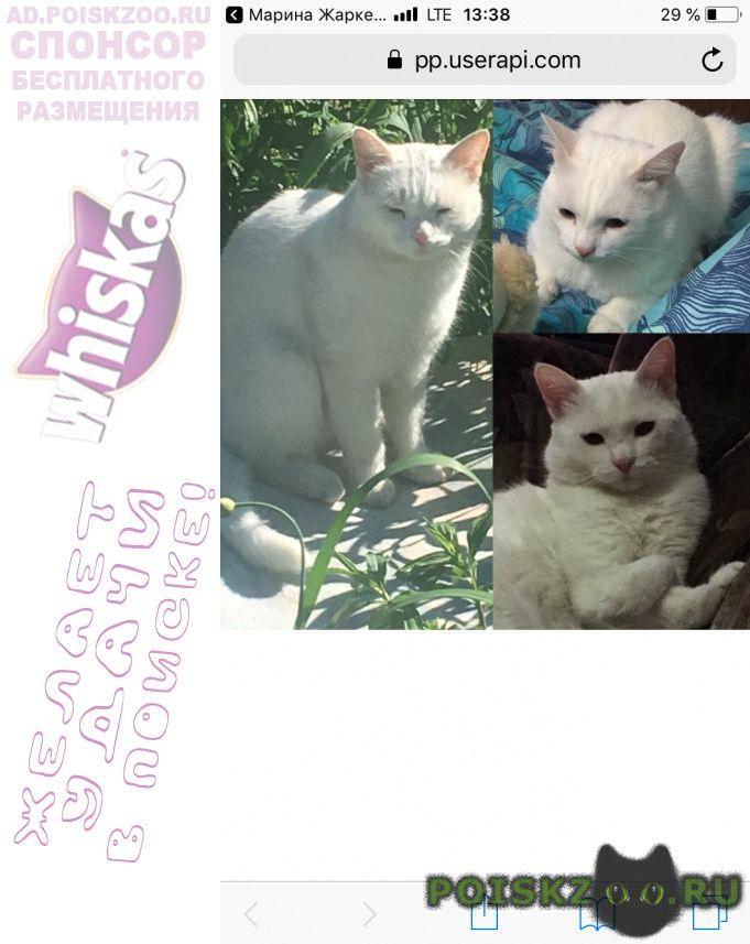 Пропал кот г.Сургут