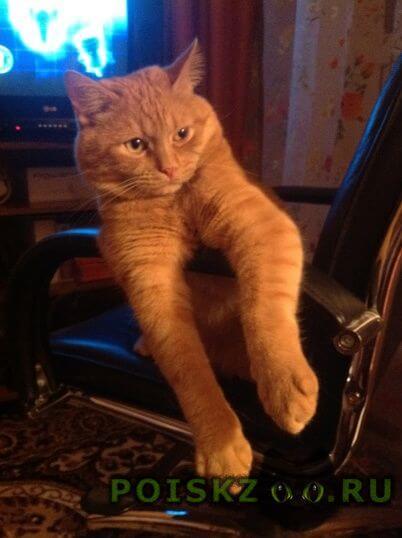 Пропал кот г.Лобня