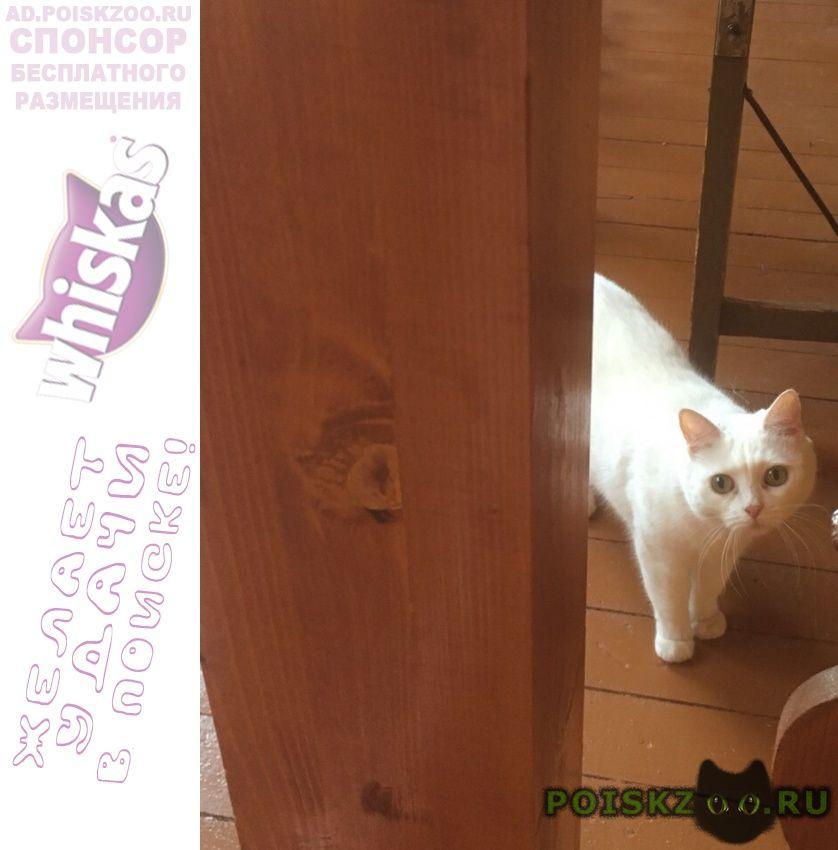 Пропала кошка белая, район мцк балтийская г.Москва