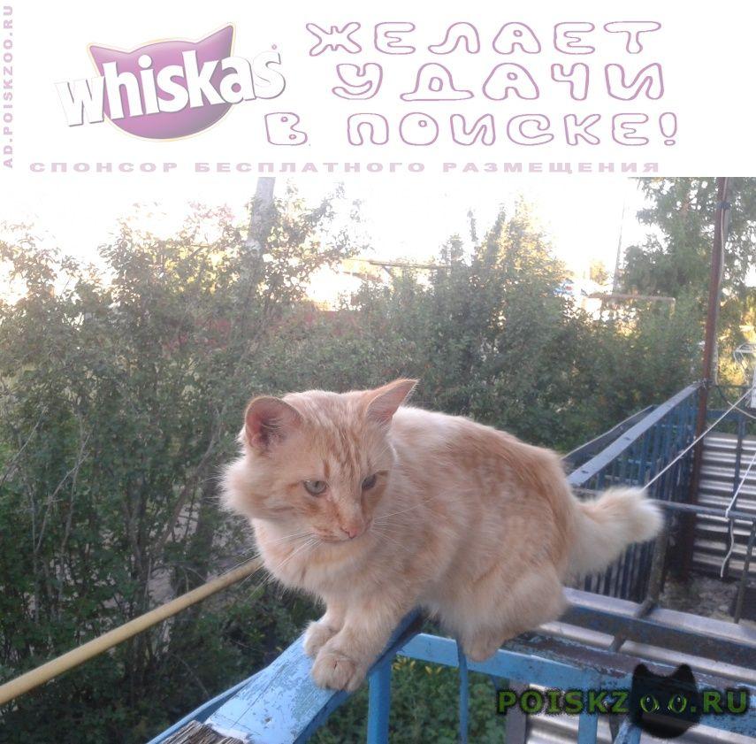 Пропал кот рыжий г.Чебоксары