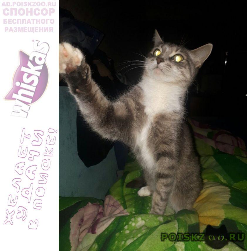 Пропала кошка г.Подольск