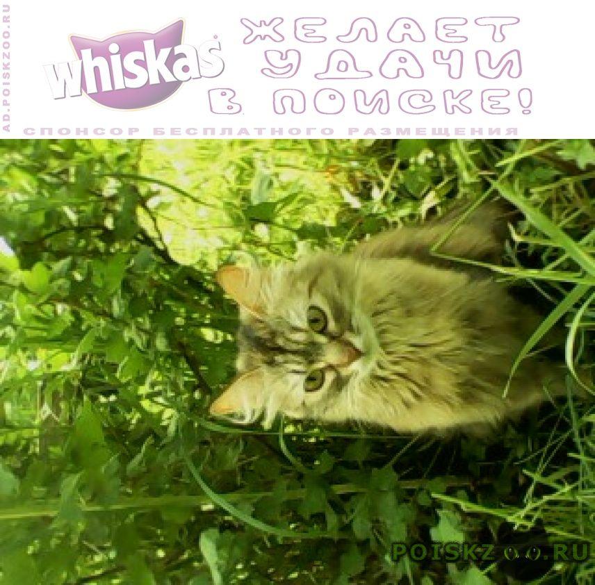 Пропала кошка мася г.Ижевск
