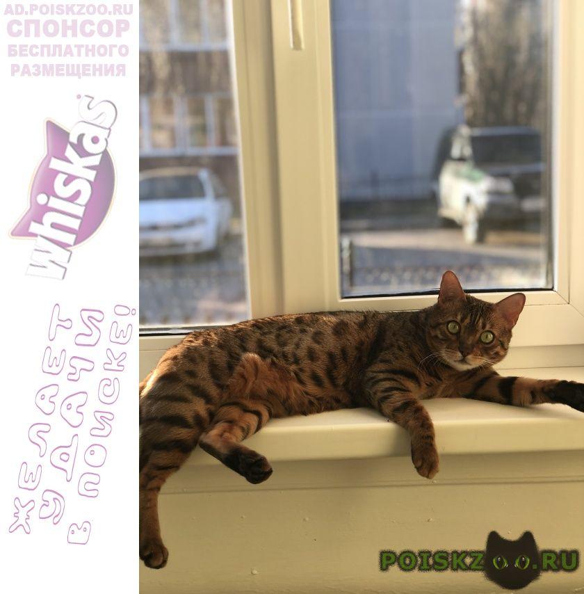 Пропала кошка ищу кошку г.Ханты-Мансийск