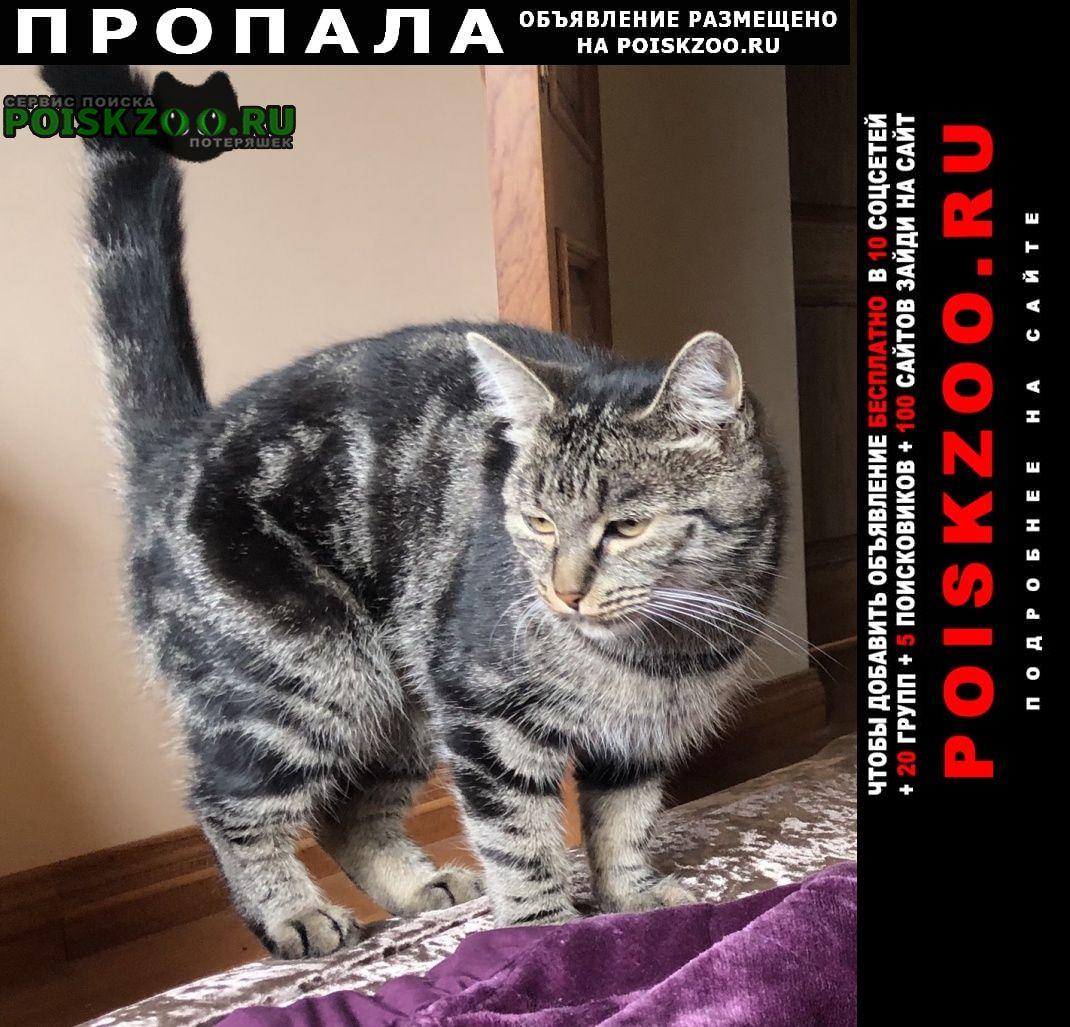 Пропала кошка сярьги-2 Всеволожск