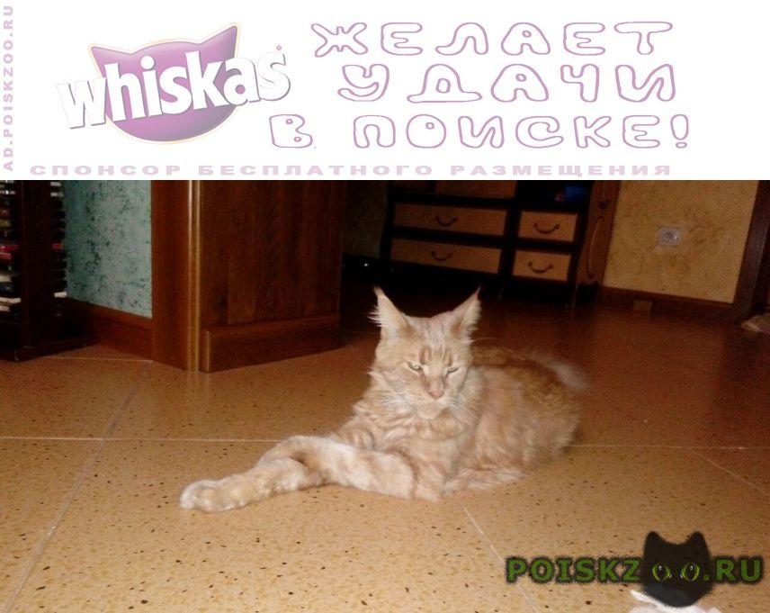 Пропал кот г.Геленджик