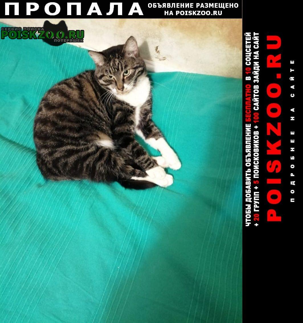 Пропала кошка в выборгском районе г.Санкт-Петербург