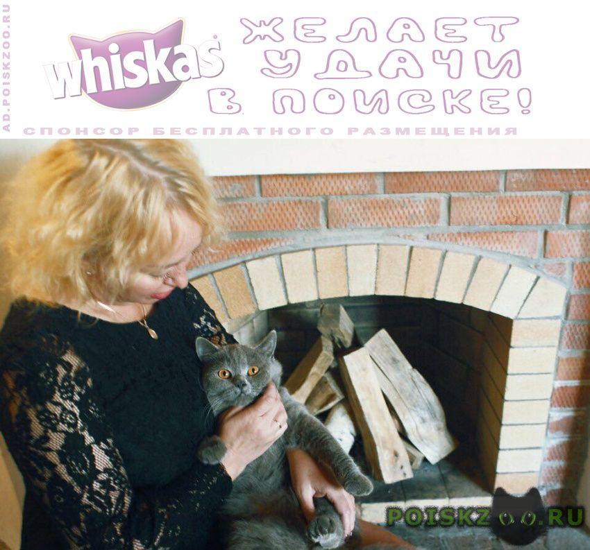 Пропал кот зовут изя г.Томск
