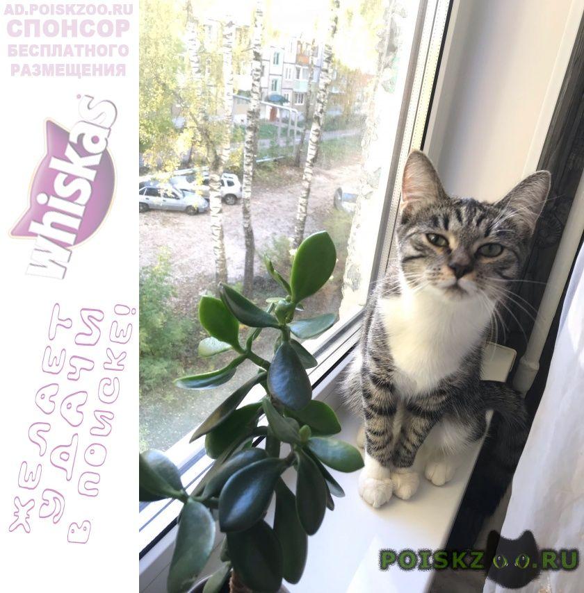 Пропала кошка г.Владимир