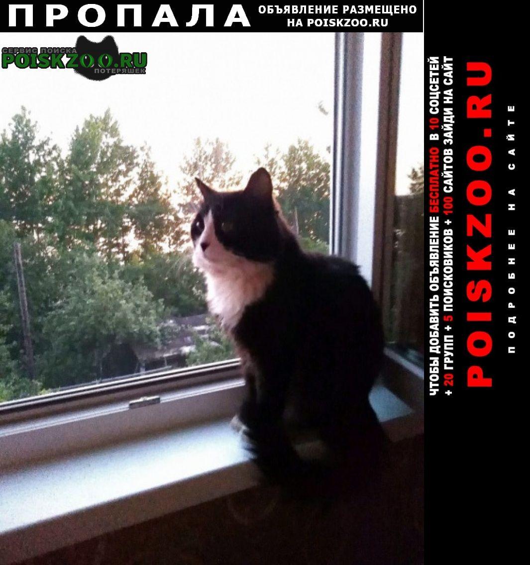 Пропала кошка Казань