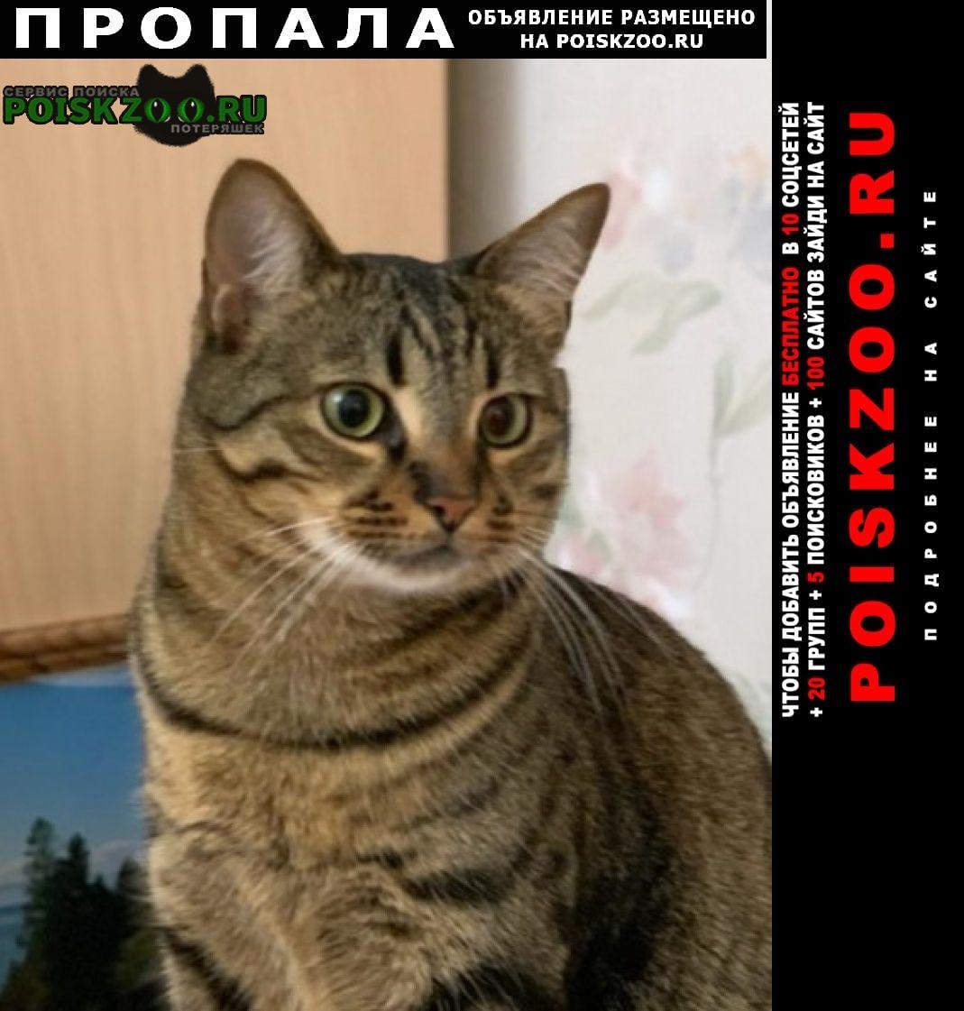 Пропал кот 3, 5 года тигрового окраса Москва